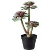 FEJKA yapay bitki, kaktüs, 12 cm